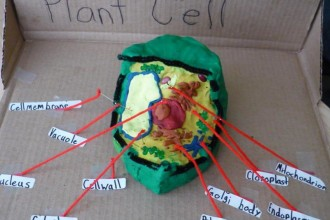 3d Plant Cell With Labels , 5 Plant Cell 3d Project Ideas In Cell Category