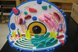 3d model of an animal cell in Butterfly