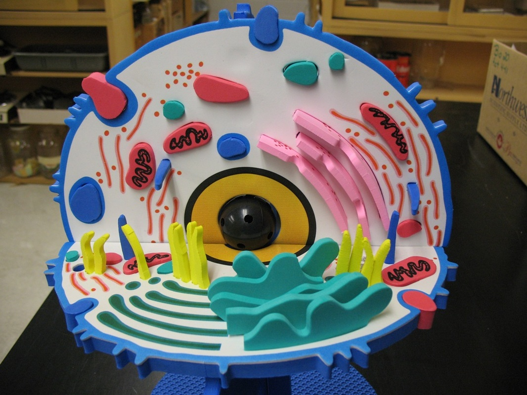 3d model of an animal cell : Biological Science Picture ...
