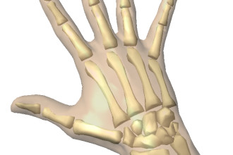 Animation of skeleton Hands in Dog