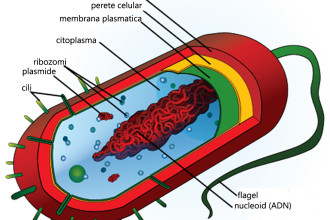 Average Prokaryote Cell , 7 Prokaryotic Cell Pictures In Cell Category