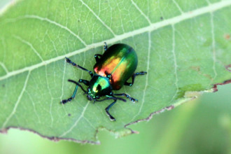 Beetle Bug pic 1 in Plants
