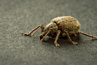 Beetle Bug pic 2 in Mammalia