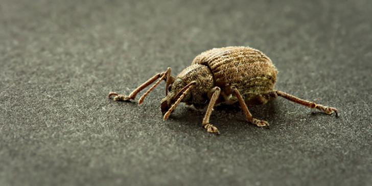 Beetles , 6 Beetle Bug Picture : Beetle Bug Pic 2