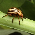 Beetle Bug pic 4 , 6 Beetle Bug Picture In Beetles Category