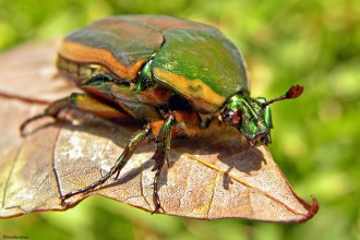Beetle Bug Pic 5 , 6 Beetle Bug Picture In Beetles Category