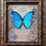 Big Blue Morpho butterfly specimens , 7 Blue Morpho Butterfly Specimen In Butterfly Category