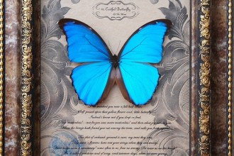 Big Blue Morpho Butterfly Specimens , 7 Blue Morpho Butterfly Specimen In Butterfly Category