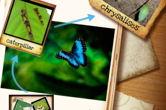 Blue Morpho Butterflies Life Cycle in Spider