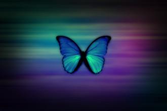 Blue Morpho Butterfly HD Wallpapers , 6 Blue Morpho Butterfly Wallpapers In Butterfly Category