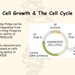 Cell Cycle , 4 Cell Cycle Animation In Cell Category