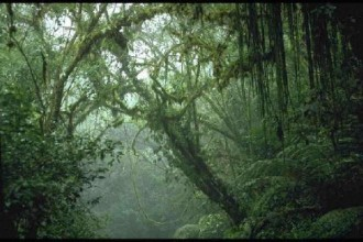 Climate Of Tropical Rainforest in Spider