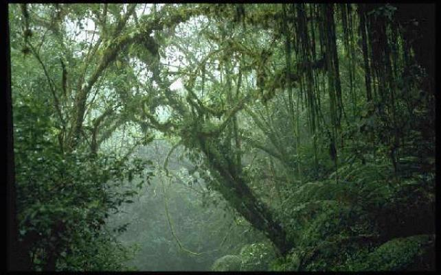 Climate Of Tropical Rainforest