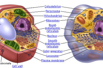 Compare the Components of Plant and Animal Cells in Bug
