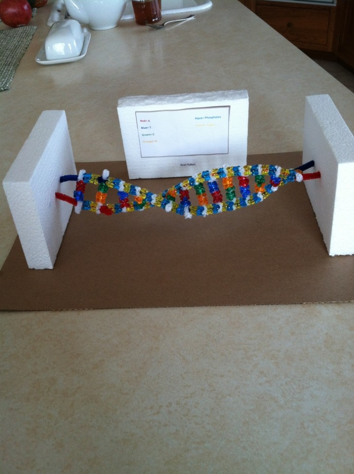 Cell , 6 Double Helix Dna Project : DNA Double Helix Science Project