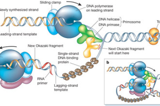 DNA Replication in Scientific data