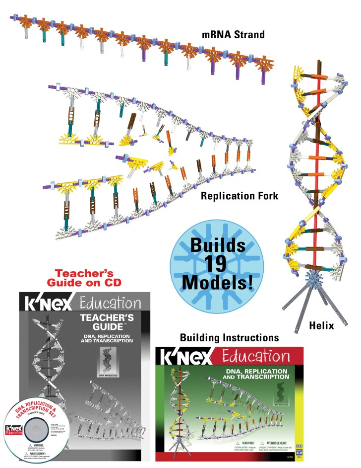 Cell , 5 Teaching Dna Replication : DNA Replication For Education