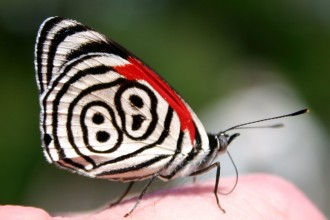 eighty eight butterfly photos photos in Skeleton