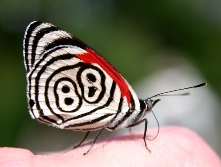 Butterfly , 7 Pictures Of Eighty Eight Butterfly : Eighty Eight Butterfly Photos Photos