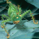 Esaltamontes on amazon rainforest , 6 Tropical Rainforest Animal Facts In Animal Category