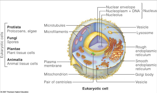structure and function of cells The basic function of the cell membrane is to protect the cell from its confirming that the structure and functions of the cell membrane are widely.