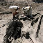 Giant skeletons , 5 Giant Human Skeletons Photos In Skeleton Category
