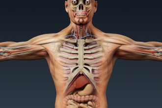 Human Anatomy 3D Model , 3 Human Skeleton 3d In Skeleton Category