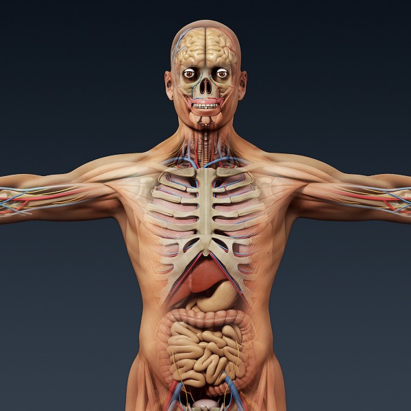 Human Anatomy 3D Model : 3 Human Skeleton 3d | Biological Science ...