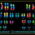 Human Chromosome pictures , 5 Human Chromosome Structure In Cell Category