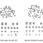 Human Chromosomes female and male , 5 Human Chromosome Structure In Cell Category
