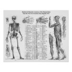 Human Skeletal and Muscular Anatomy , 6 Human Anatomy Skeleton Pictures In Skeleton Category