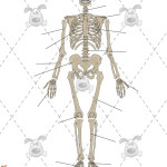 Human Skeleton Labelling games , 3 Human Skeleton Games In Skeleton Category