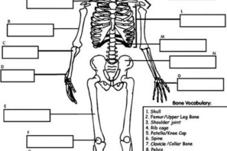 Human Skeleton printable in Genetics