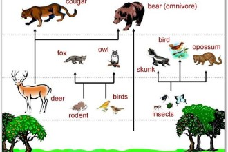 Image of Food Chain of Forest Ecosystem in Spider