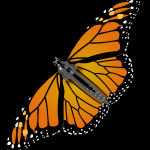 Monarch Butterfly , 10 Monarch Butterfly Clip Art In Butterfly Category