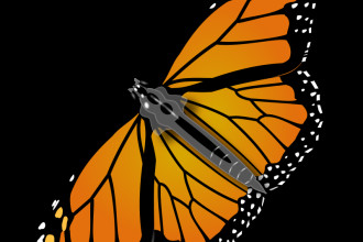 Monarch Butterfly in Butterfly