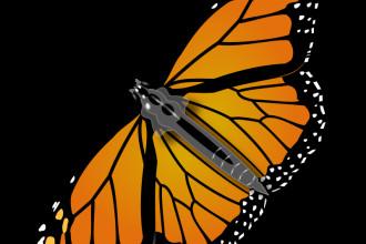 Monarch Butterfly in Bug
