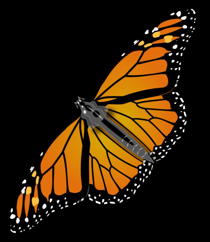Butterfly , 10 Monarch Butterfly Clip Art : Monarch Butterfly