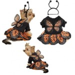 Monarch Butterfly Costumes for Dogs , 9 Monarch Butterfly Wings Costumes In Butterfly Category