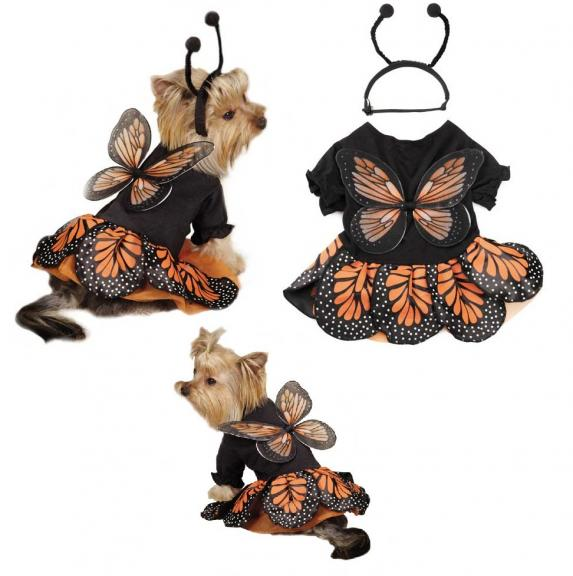 Butterfly , 9 Monarch Butterfly Wings Costumes : Monarch Butterfly Costumes For Dogs