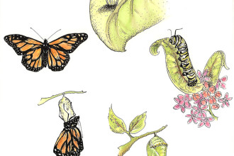 Monarch Butterfly Life Cycle in Forest