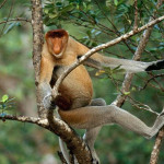 One Species of Rainforest primate , 7 Pictures Of Tropical Rainforest Primates In Primates Category