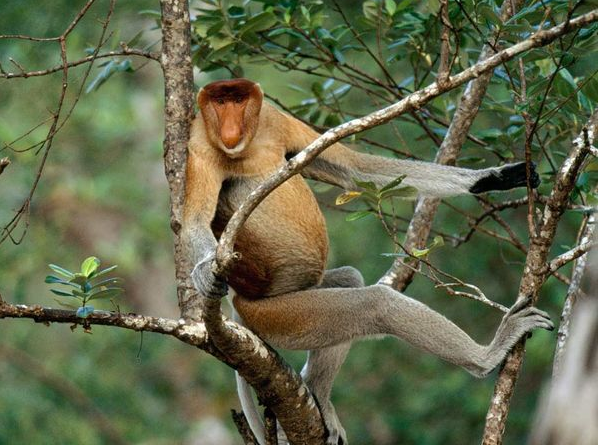 Primates , 7 Pictures Of Tropical Rainforest Primates : One Species Of Rainforest Primate