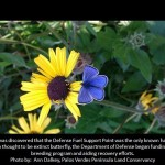 Palos Verdes Blue Butterfly facts , 5 Palos Verdes Blue Butterfly Species In Butterfly Category