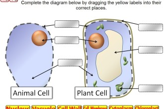 Parts Of A Cell Quiz , 6 Animal And Plant Cell Quiz In Cell Category
