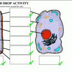 Plant And Animal Cells Diagram Quiz , 6 Animal And Plant Cell Quiz In Cell Category