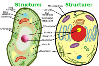 Plant and animal cells in Cell