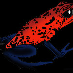 Poison Arrow Frog Clip Art , 7 Rainforest Animals Clipart In Animal Category