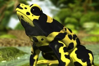 Poison Dart Frog Rainforest Animals , 5 Poison Arrow Frog Rainforest Animals In Amphibia Category