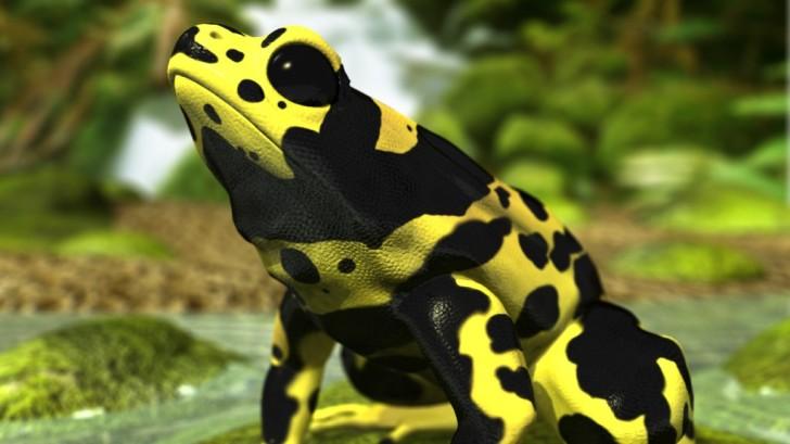Amphibia , 5 Poison Arrow Frog Rainforest Animals : Poison Dart Frog Rainforest Animals